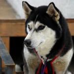001-Resized_DSC_8223-Darby-Dogsled-Races