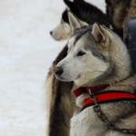 002-Resized_DSC_8221-Darby-Dogsled-Races