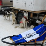 004-Resized_DSC_8175-Darby-Dogsled-Races