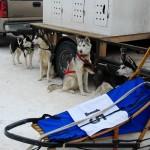 004-Resized_DSC_8175-Darby-Dogsled-Races