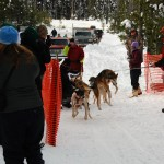 005-Resized_DSC_8155-Darby-Dogsled-Races