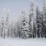 006-DSC_0830-Snow-Laden-Trees-030