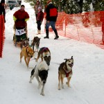 006-Resized_DSC_8167-Darby-Dogsled-Races