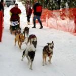 006-Resized_DSC_8167-Darby-Dogsled-Races