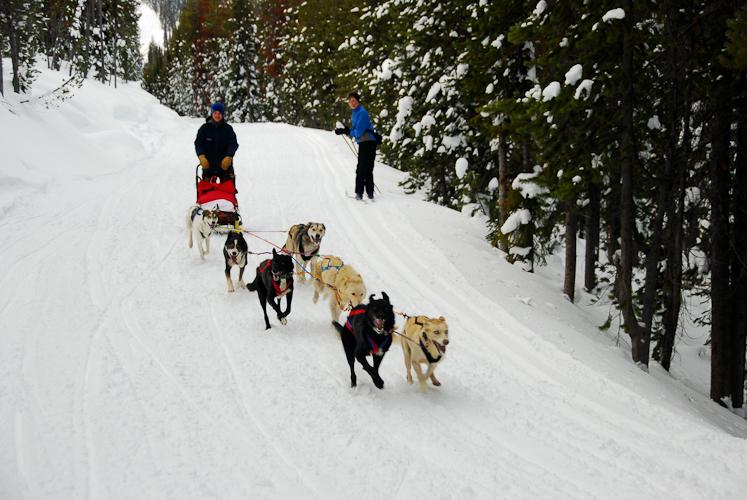 007-Resized_DSC_8142-Darby-Dogsled-Races